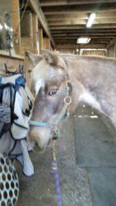sheila-horses